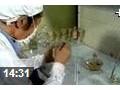 枇杷栽培技术 (241播放)