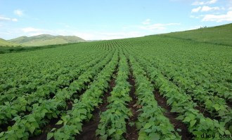 麦茬夏大豆节本栽培技术