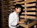 黄粉虫养殖技术 (211播放)