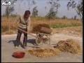 蚯蚓养殖技术(中) (606播放)