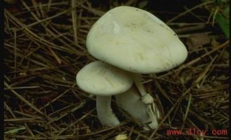秸杆种植蘑菇技术