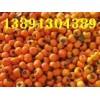 陕西柿子价格陕西金钱柿子产地6月黄柿子尖顶柿子日本甜柿子基地
