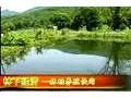 东北林蛙养殖 林蛙养殖视频 (495播放)