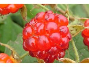 树莓 (4)