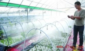 福建石狮:发展设施农业产量达传统种植的5倍 产品供不应求