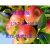 13626331680山东红星苹果大量上市