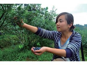 蓝莓 (6)