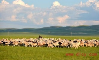 内蒙古羊存栏首破1亿只