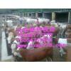 肉牛报价-肉牛养殖-育肥牛养殖技术-良种肉牛养殖场