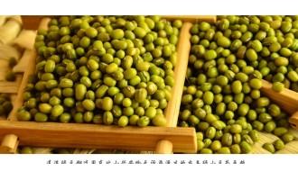 绿豆白粉病防治