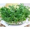新农村绿色蔬菜—豌豆芽