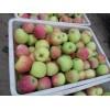 13853986373山东藤木一号/辽伏苹果产地价格