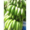 广东香蕉全国物流配送 香蕉广东种植基地 遂溪香蕉 大量批发