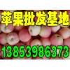 13853986373供应嘎啦/美八苹果产地直销价格