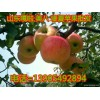 供应山东嘎啦/美八苹果13905492894