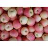 山东万亩嘎啦美八苹果供应上市