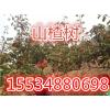 山西民生苗圃优质山楂树优质核桃树优质樱桃树优质桃树