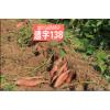 遗字138  大量供应各种商品红薯