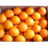 湖北橙子低价销售