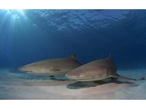 鲸鲨 (5)