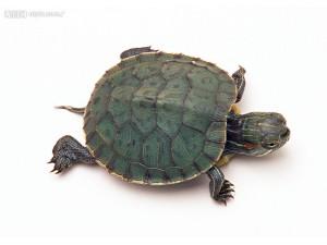 小乌龟 (5)