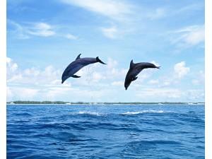 海豚 (5)