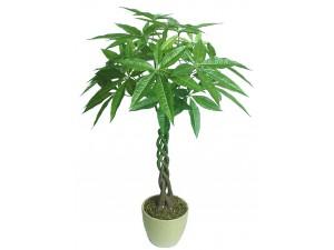发财树 (6)