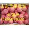 山东红富士苹果供应批发价格
