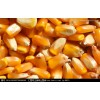 采购高粱、玉米、小(曲)麦、大(糯)米、稻谷、大豆等原材料