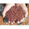 采购高粱、玉米、小(曲)麦、糯米、稻谷、大豆等原材料