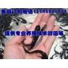 内江乐山鱼苗孵化技术,罗江县三台县鱼苗孵化技术厂家