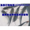 江油广元鱼苗孵化技术,射洪资中鱼苗孵化技术厂家
