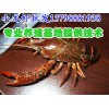 苍南文成淡水小龙虾养殖技术,淡水小龙虾养殖基地