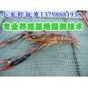 长兴安吉淡水小龙虾养殖技术,淡水小龙虾养殖基地
