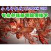 陇南市民勤小龙虾仔养殖,新鲜小龙虾批发