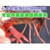 甘南山丹小龙虾仔养殖,新鲜小龙虾批发