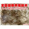 上虞嵊州泥鳅价格,泥鳅养殖技术
