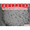 广汉市  /大量批发台湾泥鳅/纯种台湾泥鳅苗供应/绵竹市
