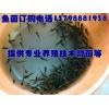 韶山耒阳淡水水产鱼苗,优质淡水鱼苗厂家