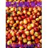 大棚优质油桃批发价/去哪里批发油桃价格最便宜/哪里油桃最好吃