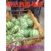 今日京欣西瓜大量上市最新批发价格便宜哪里有薄皮西瓜上市