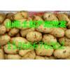 【掉价了】山东荷兰十五土豆大量批发