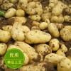 山东产地土豆大量上市批发