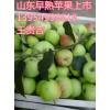 山东早熟苹果产地山东西瓜批发山东毛桃市场山东苹果网
