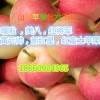 八月份苹果价格美八嘎啦苹果行情