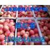 供应山东嘎啦/美八苹果价格,嘎啦苹果产地销售价格