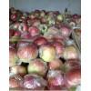 产地大量批发嘎啦美八苹果
