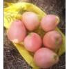 福建省平和蜜柚苗价格,红心蜜柚苗今年多少钱
