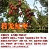 阿克苏红枣批发市场价格