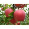 红星苹果最新批发价格便宜现在什么批发价格